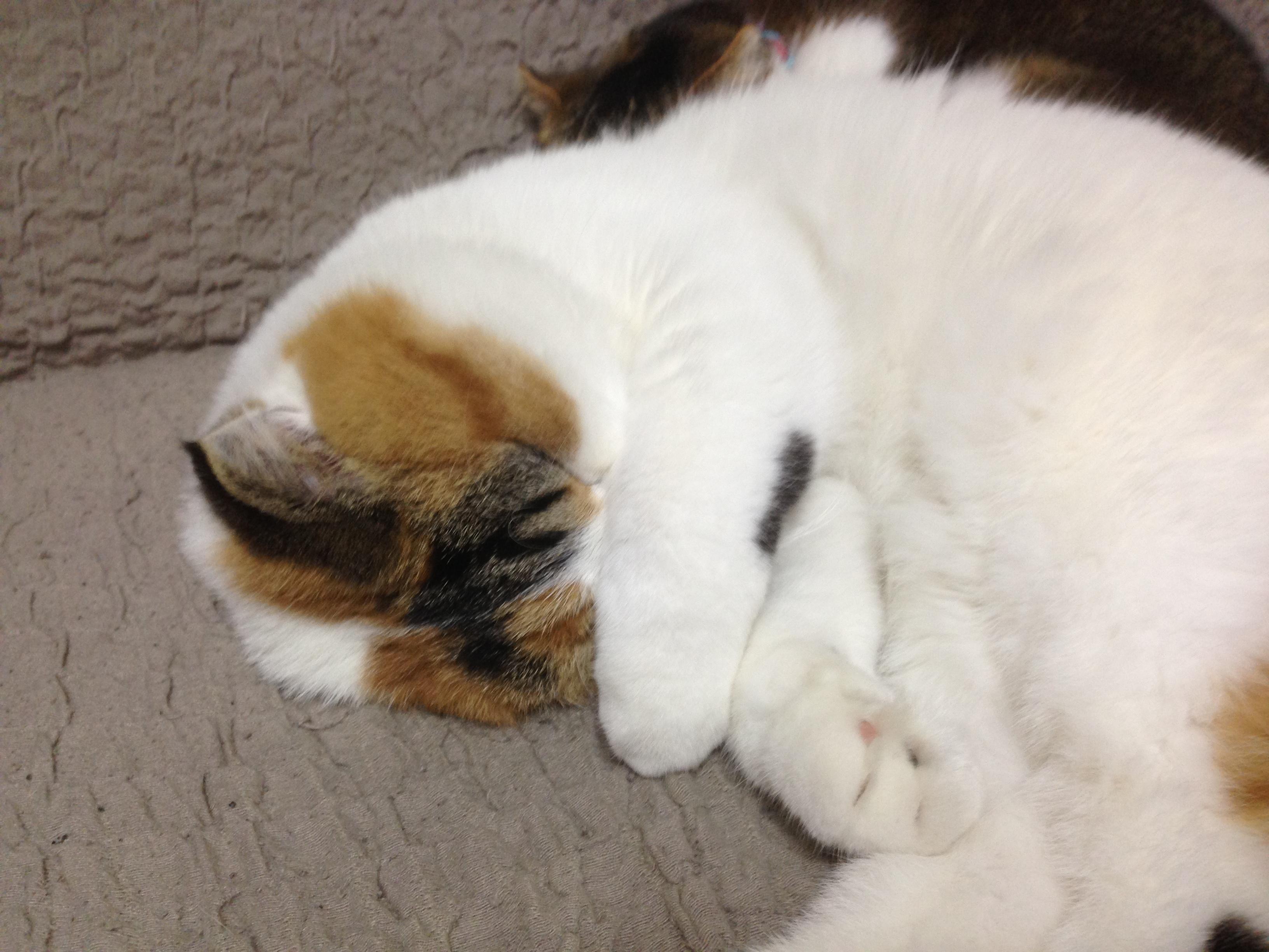 [ブログ]寝ている間の寝返りはダイエットに効果的。