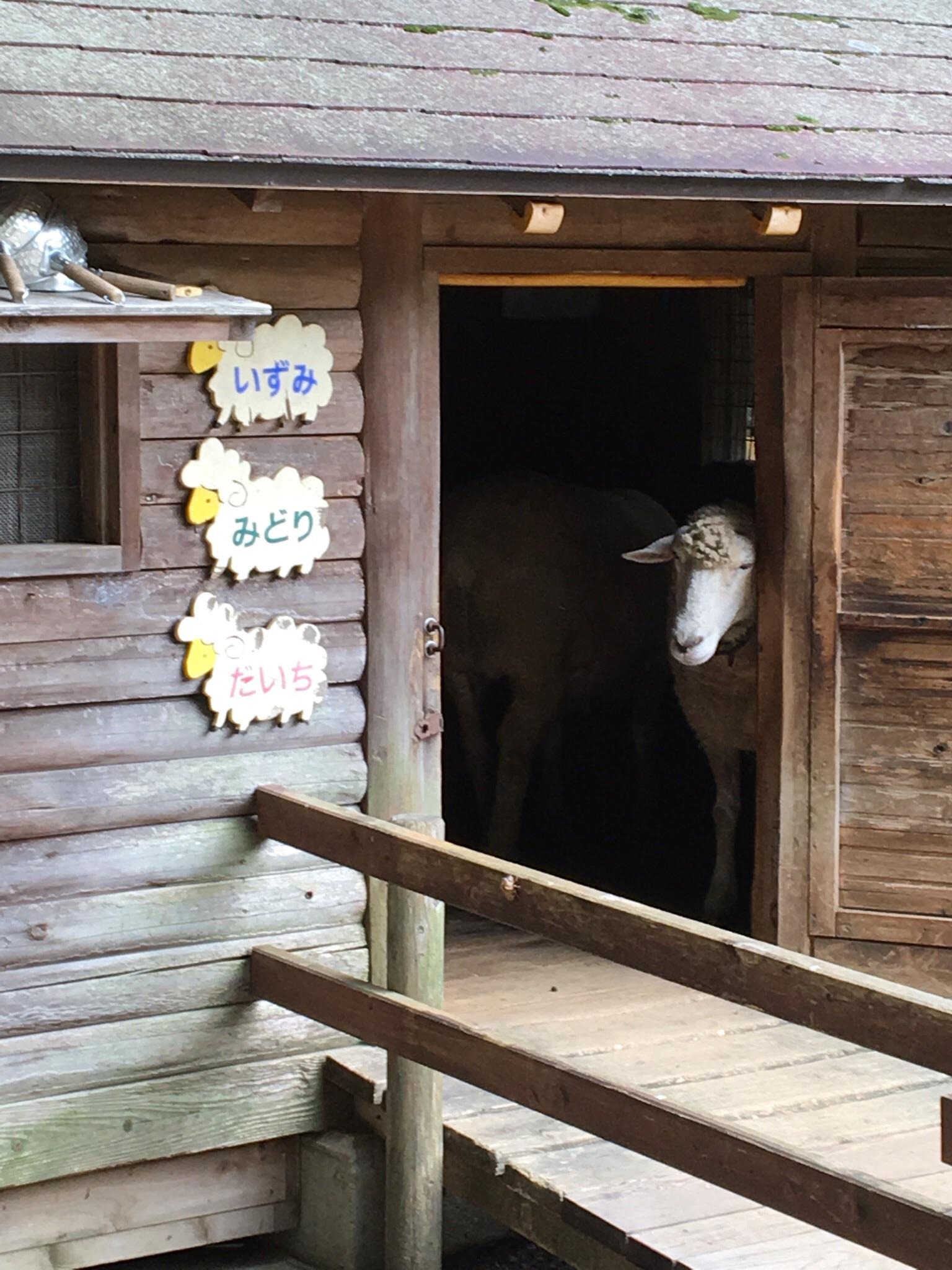 大泉緑地ランニングそして羊さん。