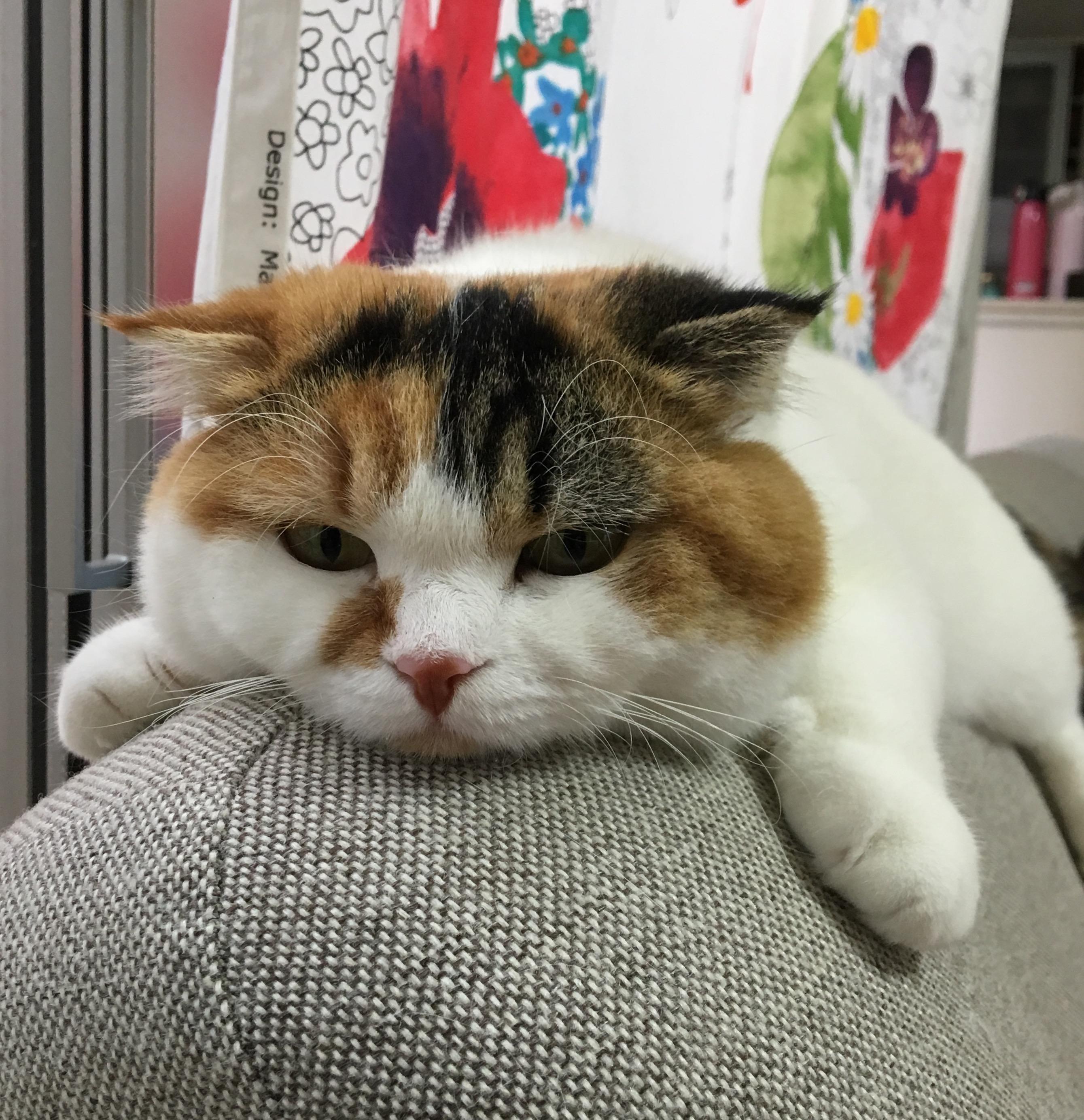 阿倍野店藤井寺店耳つぼダイエット無料カウンセリング今週の空き時間