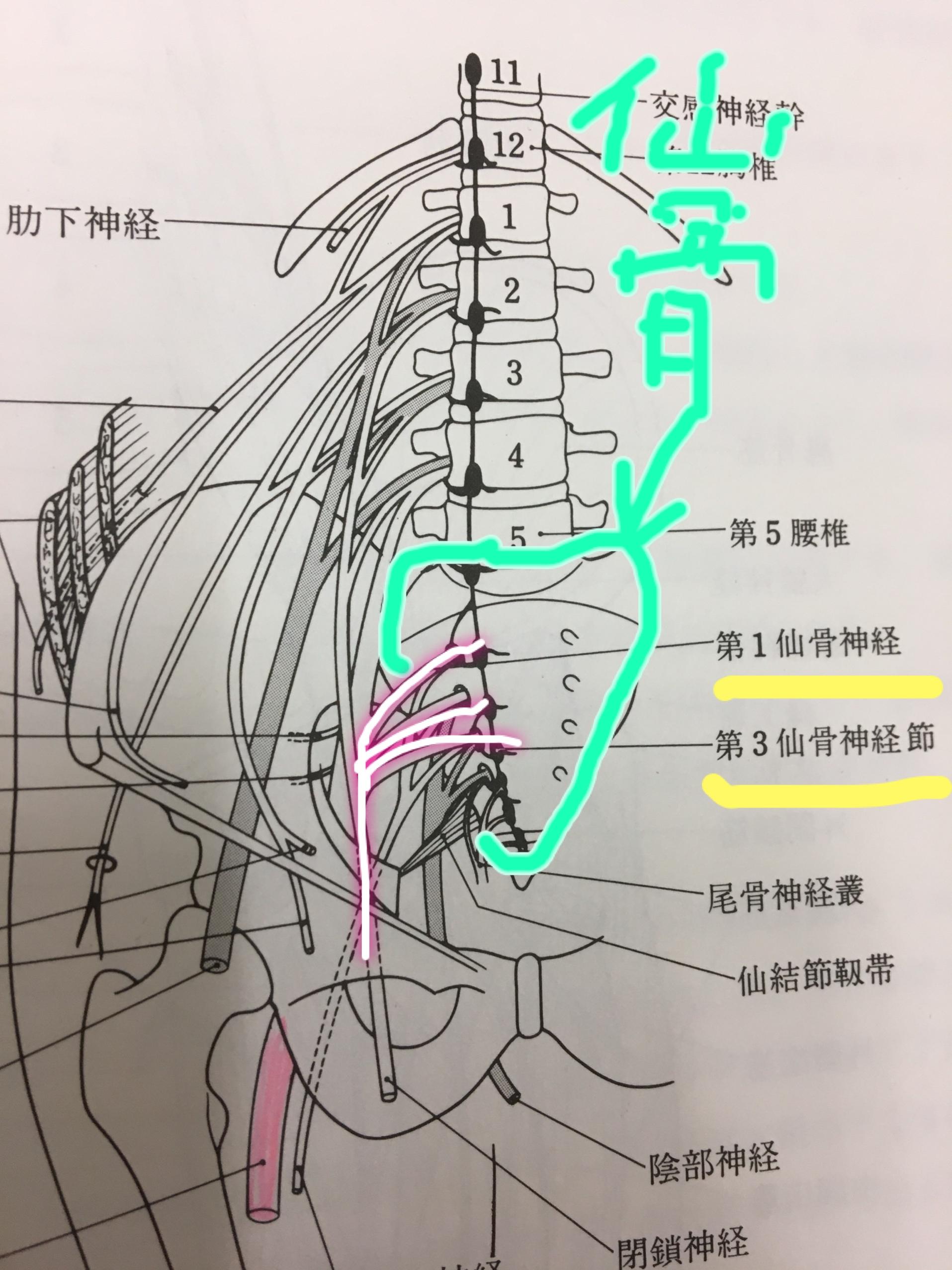 [ブログ]仙骨にカイロを貼ると痩せやすくなる!?。
