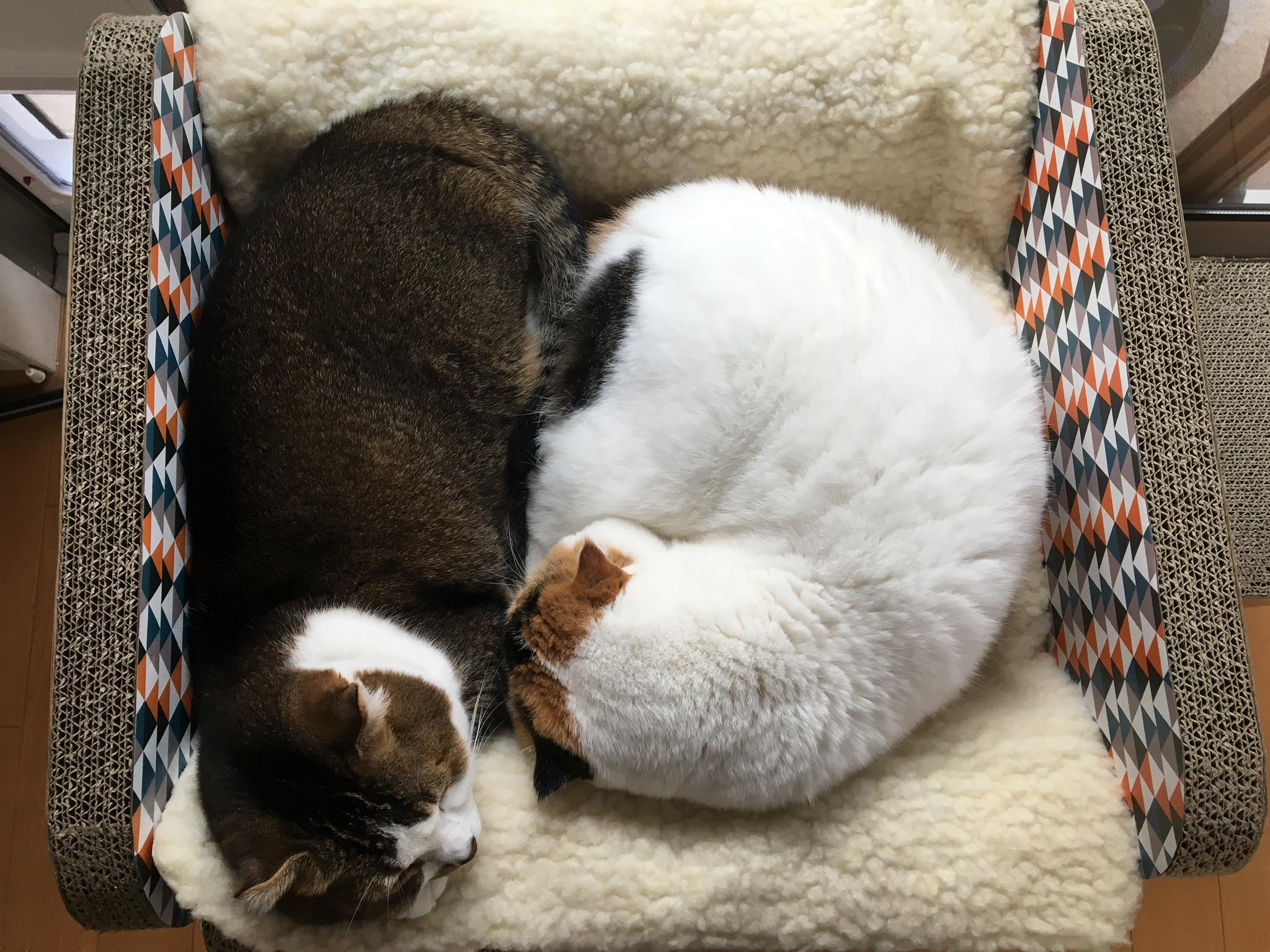 [ブログ]7時間寝る人が1番長生き。そしてよくやせる。